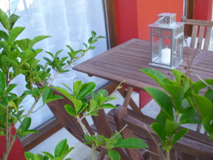 detalle de una terraza